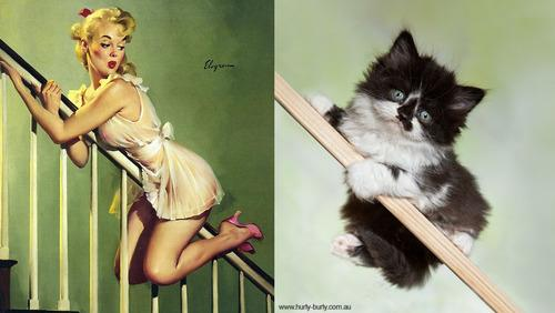 Feline Frisky With Cats That Look Like Pin-Up Girls