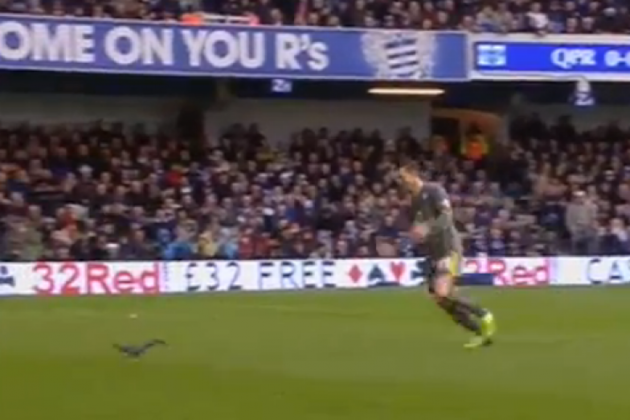 Joey Barton running scared as rogue squirrel causes mayhem at Loftus Road