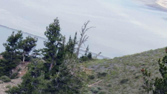 """This July 15, 2012, image provided by Coty Creighton shows the """"goat man,"""" in white at center, right, near Ogden, Utah. This man spotted dressed in a goat suit among a herd of wild goats in the mountains of northern Utah has wildlife officials worried he could be in danger as hunting season approaches. Phil Douglass of the Utah Division of Wildlife Resources said Friday July 20, 2012, the person is doing nothing illegal, but he worries the so-called """"goat man"""" is unaware of the dangers. (AP Photo/Coty Creighton)"""
