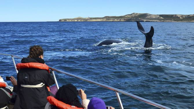 Tourists watch at a Southern Right Whale known in Spanish as ballena franca austral in the waters of the Atlantic Sea, offshore Golfo Nuevo, of the Valdes Peninsula