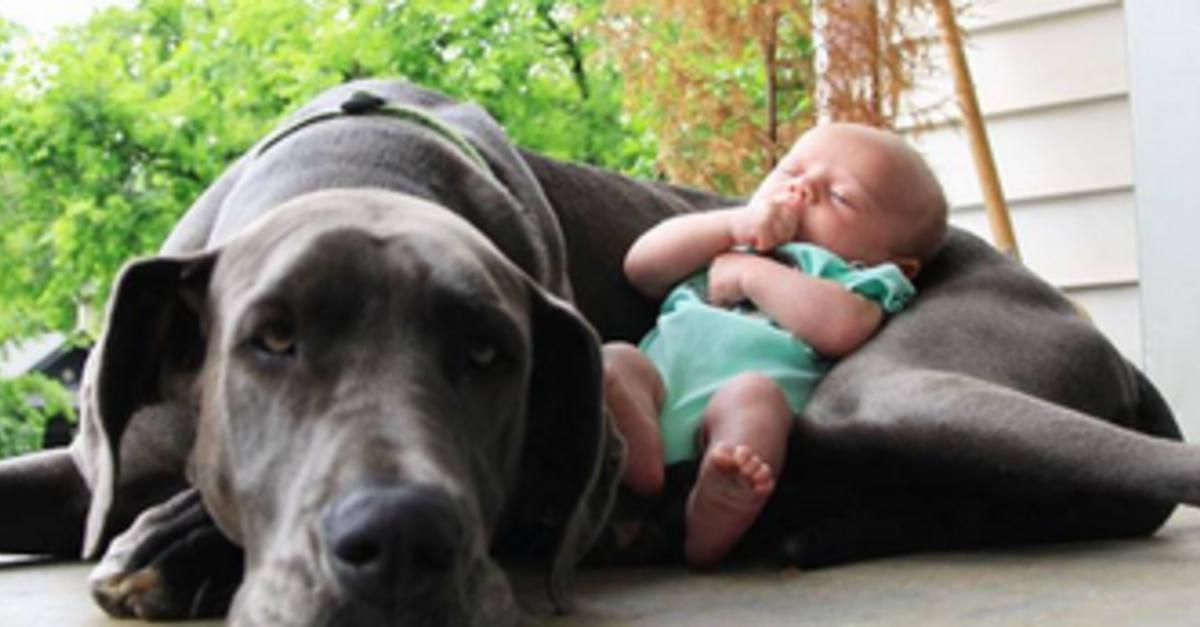 10 Reasons Why It's Better To Have A Big Dog
