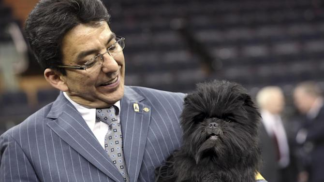 Handler Ernesto Lara poses for photographers with Banana Joe, an affenpinscher who won best in show during the 137th Westminster Kennel Club dog show, Tuesday, Feb. 12, 2013 at Madison Square Garden in New York.  (AP Photo/Mary Altaffer)