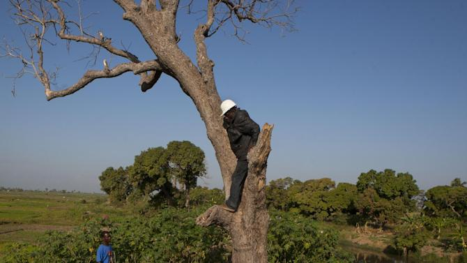 In this Jan. 22, 2013 photo, snake handler Saintilus Resilus stands in a tree as he hunts for snakes that he will use in his Pre-Lenten Carnival street performances, in the countryside of L'Estere, in Haiti's Artibonite state. Resilus has scars from owl bites on his hands, and palms rough like sandpaper from climbing trees to capture animals. Haiti's snakes aren't venomous, but they have poisoned some relationships. His wife left him in 1991. (AP Photo/Dieu Nalio Chery)