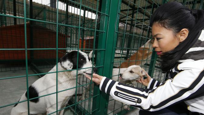 Vanessa Mae pets dogs at the PovoDog dog shelter near Sochi