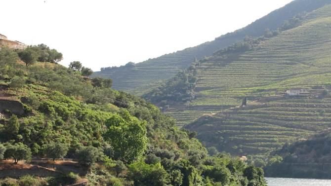 This June 2014 photo shows terraced vineyards along the Douro river near Pinhao, Portugal. These mountain-hugging terraced vineyards produce one of the most recognizable wines in the world and the most visible export of this economically struggling country. (AP Photo/Giovanna Dell'Orto)