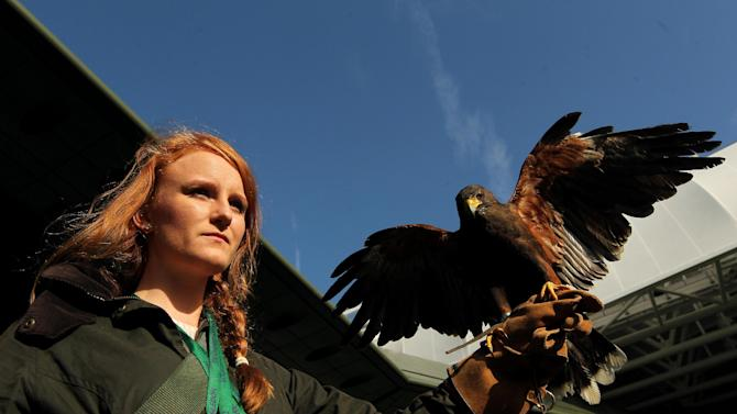 In this with image taken Wednesday June 27, 2012  Rufus the Harrier Hawk, with handler Imogen Davies on Centre Court as he patrols the grounds to scare away pigeons during day three of the 2012 Wimbledon Championships at the All England Lawn Tennis Club, Wimbledon England.  Police said Saturday June 30, 2012 Rufus the hawk who was being used to patrol skies and deter pigeons from the Wimbledon Lawn Tennis Championships has been stolen.  (AP Photo/Stephen Pond/PA)  UNITED KINGDOM OUT