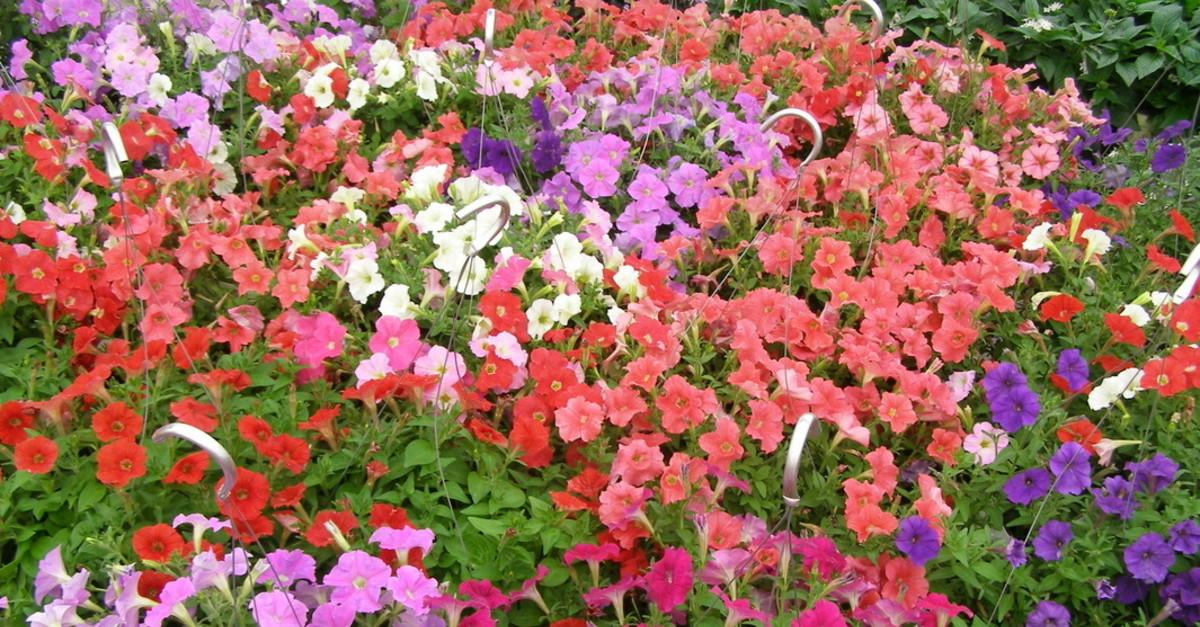 8 Low Maintenance Plants For Your Spring Garden