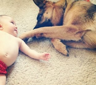 5 Ways to Prepare Your Dog to be Baby's Best Friend