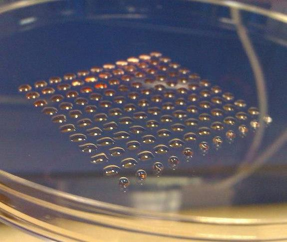 3D-Printed Human Embryonic Stem Cells Created for First Time