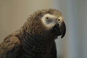 Parrots Can Reason Like 3-Year-Old Kids
