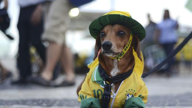 A dog dressed in the colours of Brazil sits at Copacabana beach during a broadcast of the World Cup soccer match between Brazil and Cameroon in Brasilia, in Rio de Janeiro