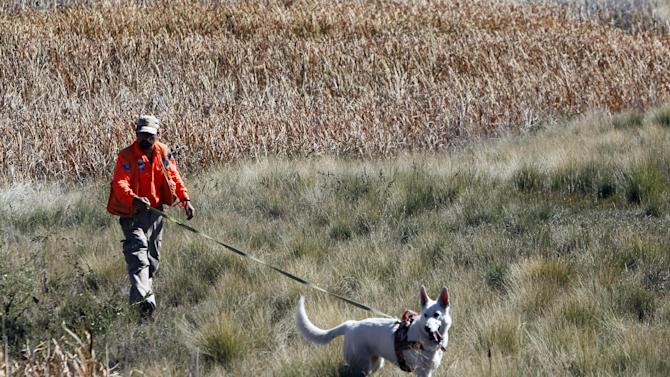 A member of a search and rescue team leads his dog through a field of tall grass searching for ten-year-old Jessica Ridgeway near her home in Westminster, Colo., on Monday, Oct. 8, 2012. The youngster has been missing since she left her home Friday morning on her way to school. (AP Photo/Ed Andrieski)