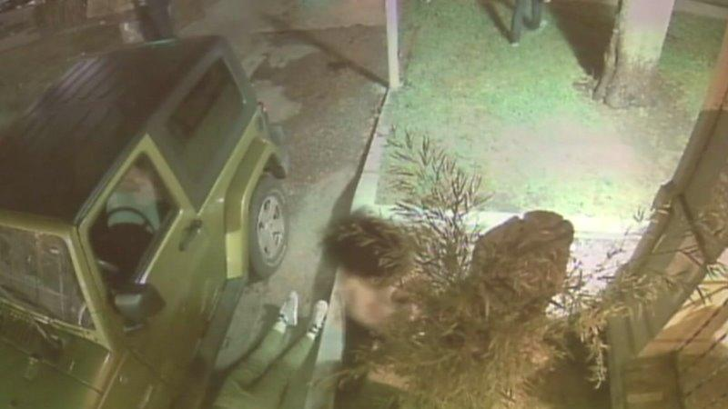 Raw: L.A. Firefighter Caught on Camera Beating Woman for Feeding Stray Cats