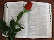 Bible with rose