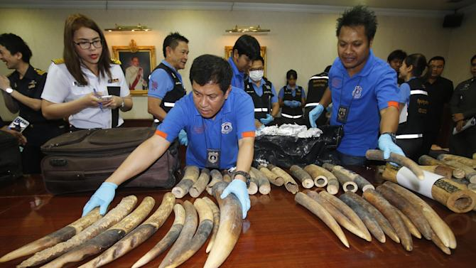 Thai customs officials display seized ivory during a press conference in Bangkok, Thailand, Monday, July 6, 2015. Thai authorities seized more than 200 kilograms of ivory hidden in luggage shipped out from Congo to Laos. (AP Photo/Sakchai Lalit)
