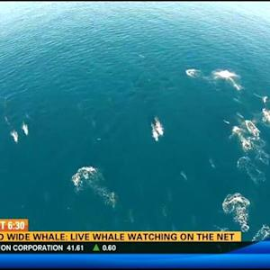 World wide whale: Live whale watching online