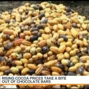 Rising Cocoa Prices Take a Bite Out of Chocolate Bars