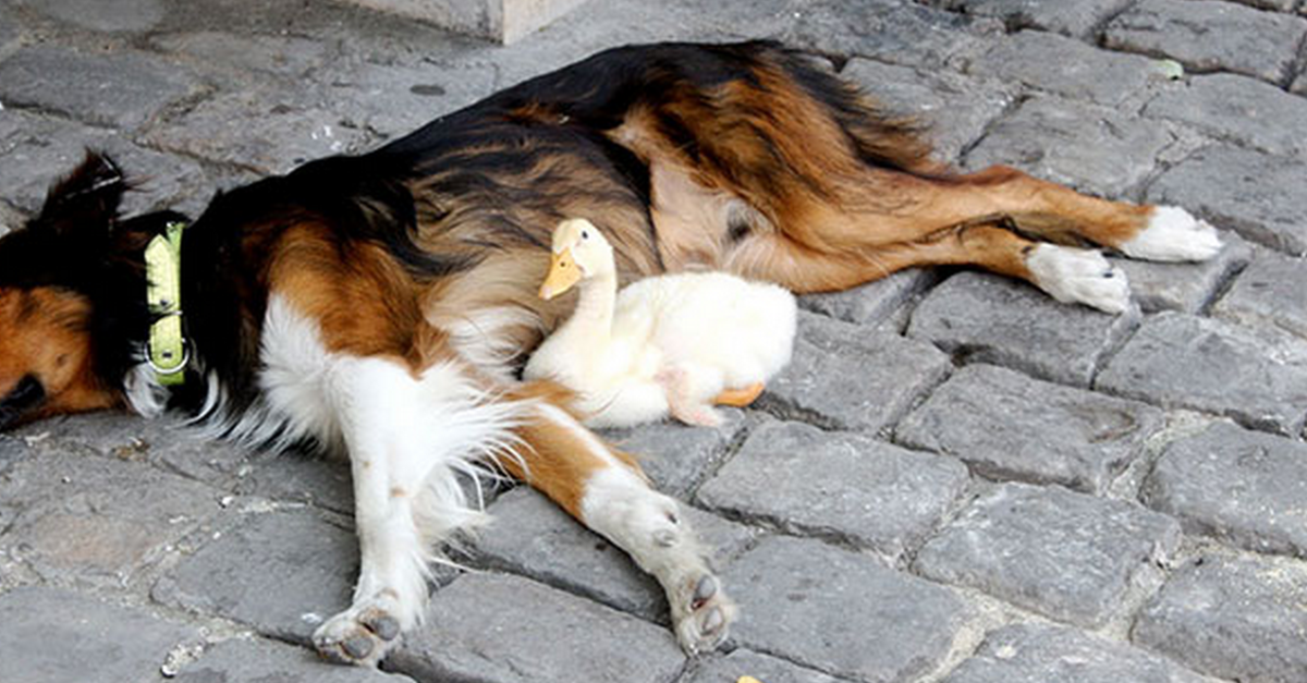 19 Animal Friends Taking A Nap