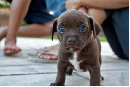 Blue-eyed Puppy