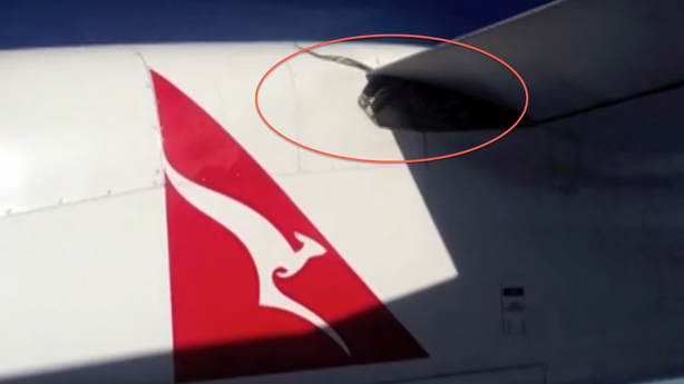 The Truth About That Snake on a Plane, According to Science