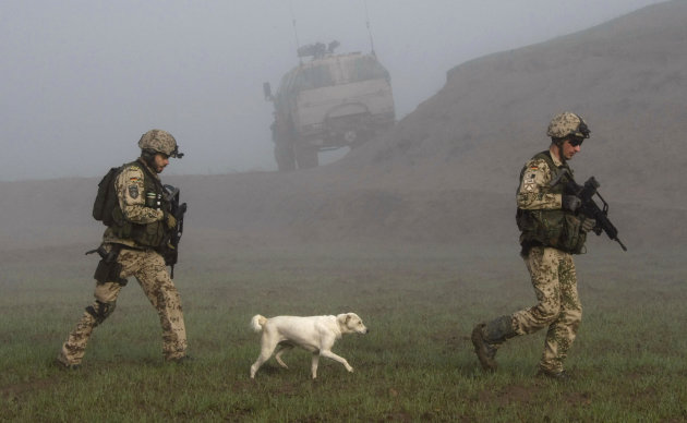 A dog follows German Bundeswehr …