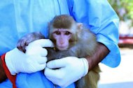 An Iranian scientist holds a monkey with light fur and a mole above its right eye, claimed to have been taken on January 28, 2013, before being sent into space. Iran&#39;s announcement that it had successfully sent a monkey into space stirred questions on the Internet on Saturday, with people pointing to differences between official images of the primate before takeoff and after landing