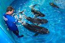 Four Baby Whales Rescued in Florida