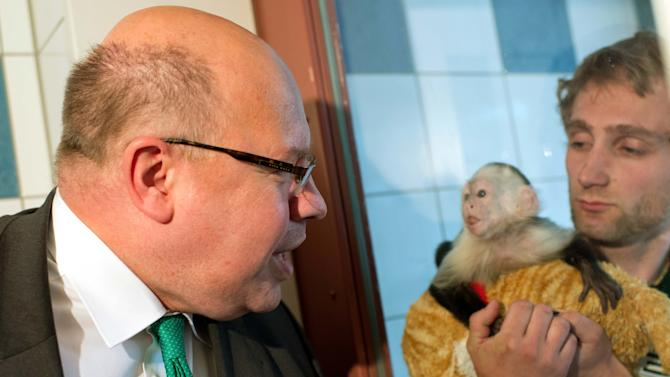 German Minister for Environment Peter Altmaier visits Justin Bieber's capuchin monkey Mally at the animal shelter in Munich southern Germany, Tuesday, May 21, 2013. Justin Bieber's pet monkey is now the property of Germany. Mally was seized by German customs March 28 when Bieber failed to produce required vaccination and import papers for the animal after landing in Munich for a European tour. He had until midnight Friday to produce those documents. Customs spokesman Thomas Meister said the customs authority issued an order later Tuesday formally transferring ownership of the animal to the German state. (AP Photo/dpa, Peter Kneffel)