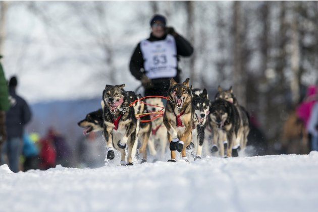 Louie Ambrose's team charges down the trail at the re-start of the Iditarod dog sled race in Willow