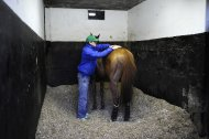 FINDON, ENGLAND - MARCH 04: Nick Gifford makes his daily evening inspection checking on their welfare at Nick Gifford's Downs Stables on March 04, 2014 in Findon, England. (Photo by Alan Crowhurst/Getty Images)