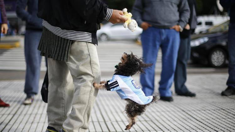 A dog wearing the national Argentinian soccer jersey jumps next to its owner, before the team's World Cup final soccer match against Germany, in Buenos Aires