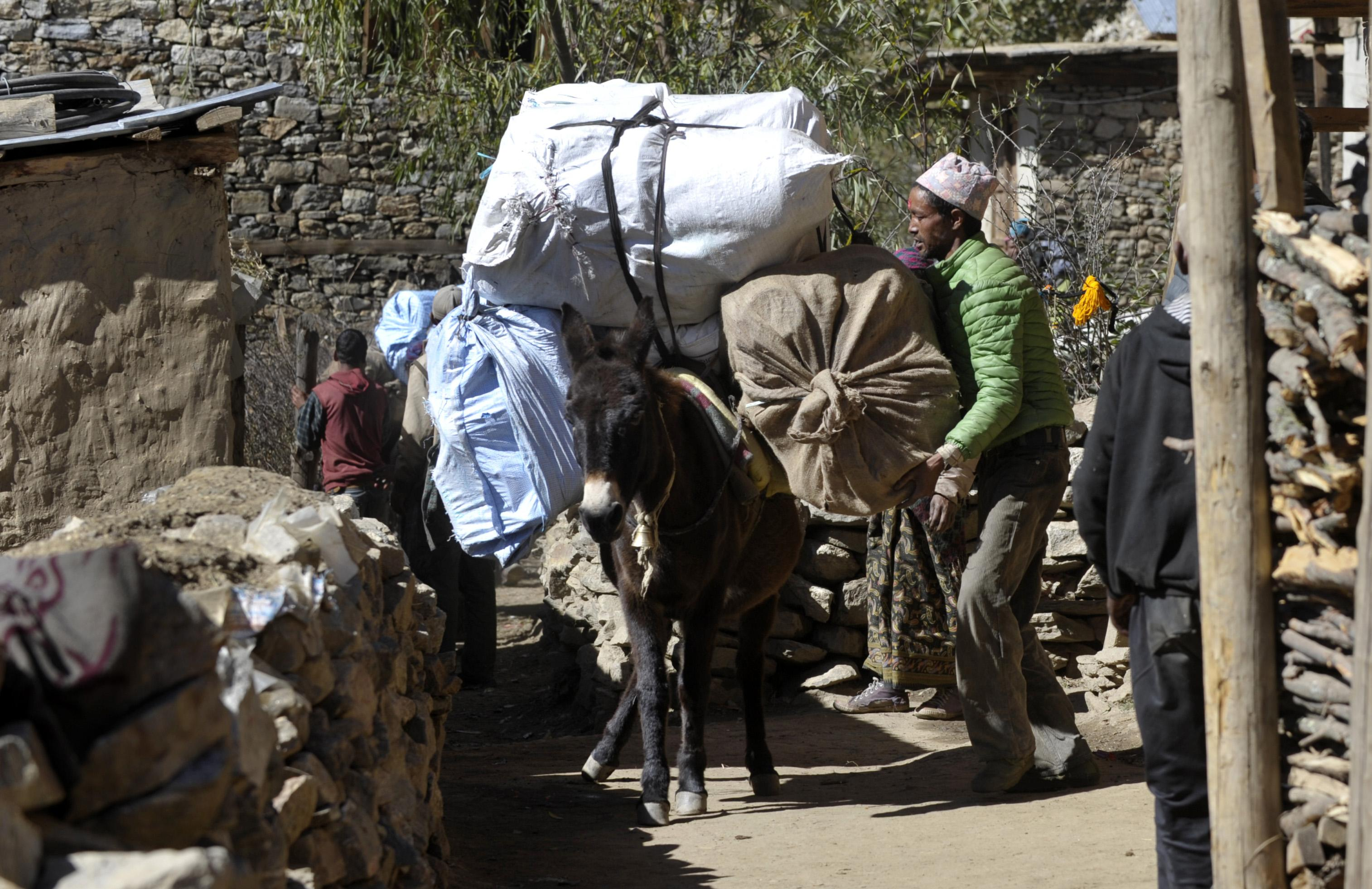 End of the road for Nepal's traditional Himalayan 'caravans'