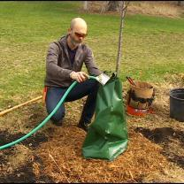 'Roots In Minnesota' Plants Trees For Arbor Day
