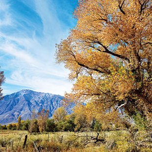Vivid fall color of the Eastern Sierra