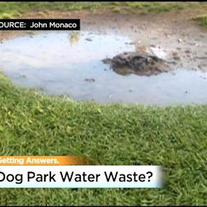 Puddles At The Dog Park: Owners Say Roseville Parks Department Overwatering Grass