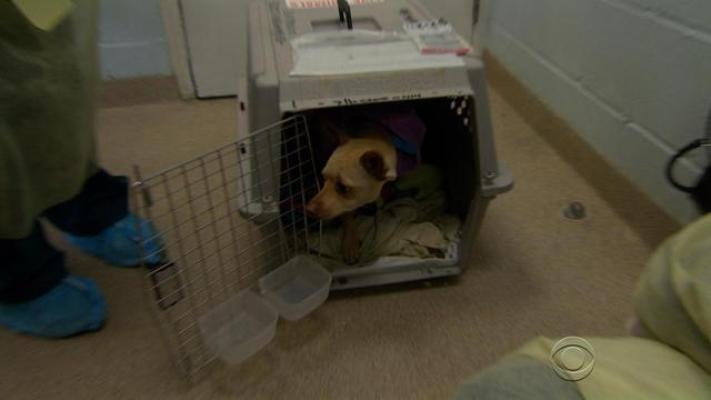 Demand for rescue dogs exceeds supply in some states
