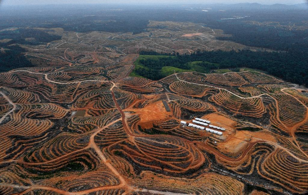 Indonesia takes aim at palm oil after forest fires