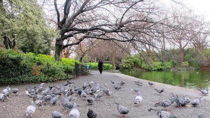 This March 16, 2012 photo shows a flock of pigeons fills the pondside pathway in Dublin's central park, St. Stephen's Green. The park is a haven in the heart of Ireland's capital of 1.3 million and a popular resting spot for tourists, Dubliners and fowl alike. (AP Photo/Shawn Pogatchnik)