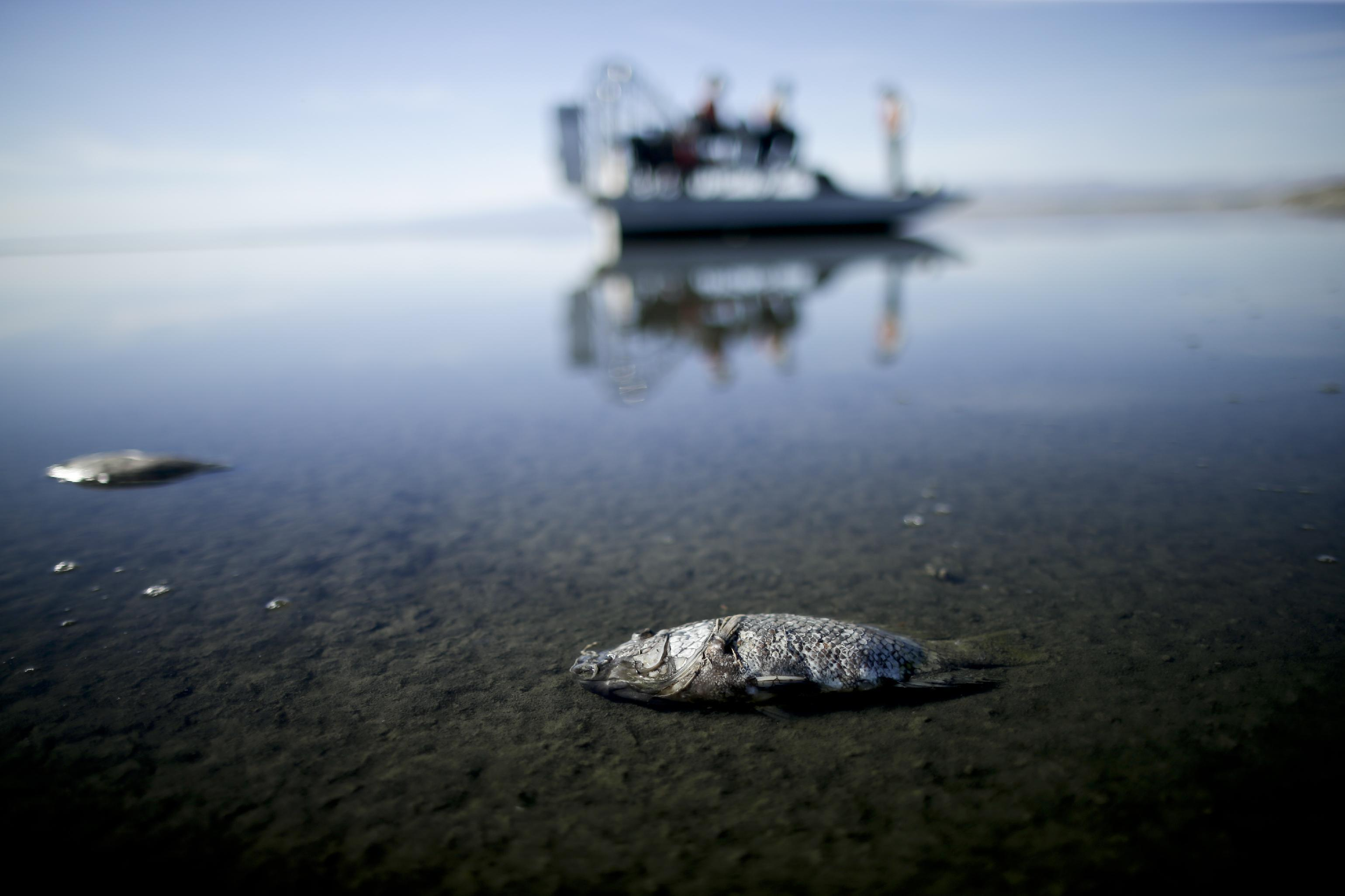 California's largest lake threatened by urban water transfer
