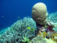 In this underwater photo, released by US-based charity &#39;The Nature Conservancy&#39; in 2011, corals are pictured in Indonesia&#39;s Wakatobi archipelago. More than 85 percent of reefs in Asia&#39;s &quot;Coral Triangle&quot; are directly threatened by human activities such as coastal development, pollution, and overfishing, a new report warned on Monday