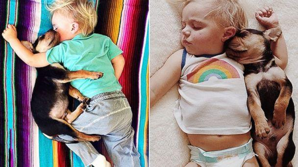 Tiny Toddler Takes Magical Naps with New Puppy