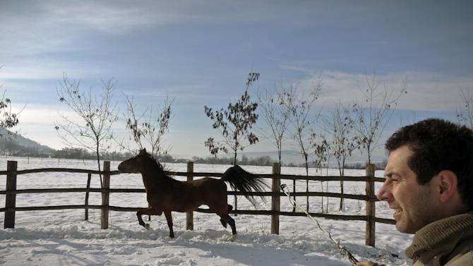 """In this photo taken on Tuesday, Feb. 12, 2013,  Simion Craciun, a Romanian farmer, trains a horse,  at Sieu Sfantu, in Romania's central region Transylvania. The name of his farm translates roughly as """"Saving Horses from Wolves."""" But for Simion Craciun, the real predators are from the nearby slaughterhouse.  When word has gotten to him that a horse is being sold to the abattoir in the poor northern Transylvania region where he lives, he has rushed out to offer more money and bring the creature back to his picturesque plot where tourists come for riding lessons, he said. (AP Photo/Olimpiu Gheorghiu)"""