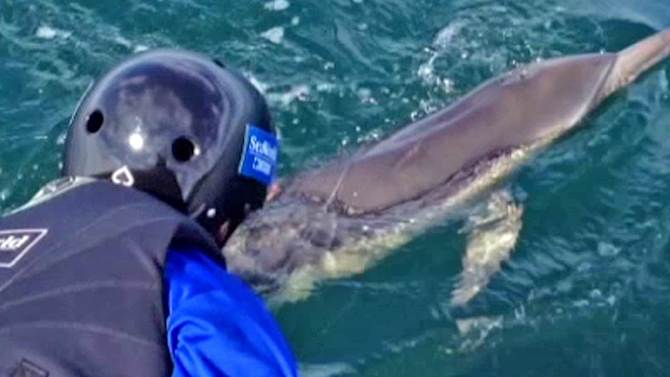 Dolphin entangled in fishing line freed off San Diego