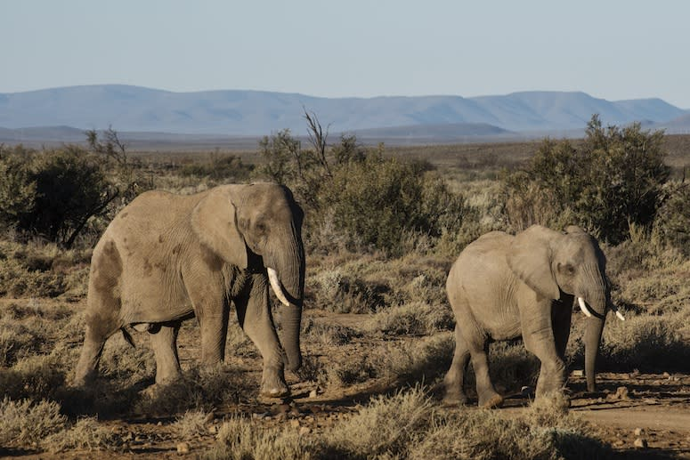 One State Closed a Loophole—and Took a Big Step Toward Ending the Ivory Trade