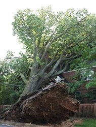 <p>An uprooted tree caused damage to electrical lines and a home in Washington, DC. Pepco, the electric utility that serves Washington and some of its suburbs, said in an automated telephone message Saturday that 440,000 of its customers were still without power.</p>