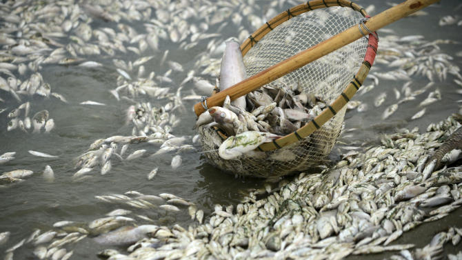China scoops up 100,000 kg of poisoned dead fish