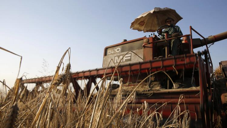 A French farmer drives a combine as he harvests barley in a field in Sancourt, near Cambrai northern France