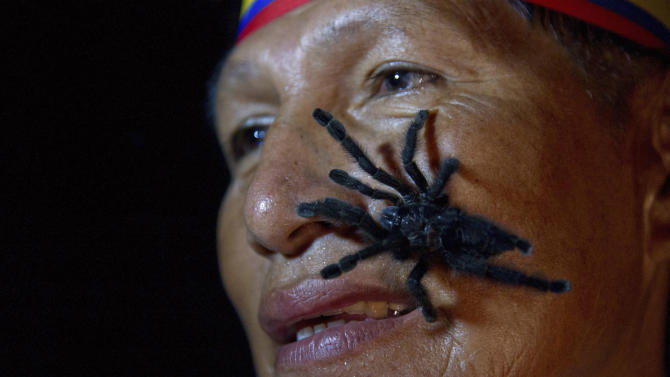 Gabriel Guallo of Ecuador's Quichua tribe stands with a tarantula on his face to demonstrate how he is planning to break a world record, in El Tena