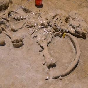 Mammoth skeleton discovered in Texas