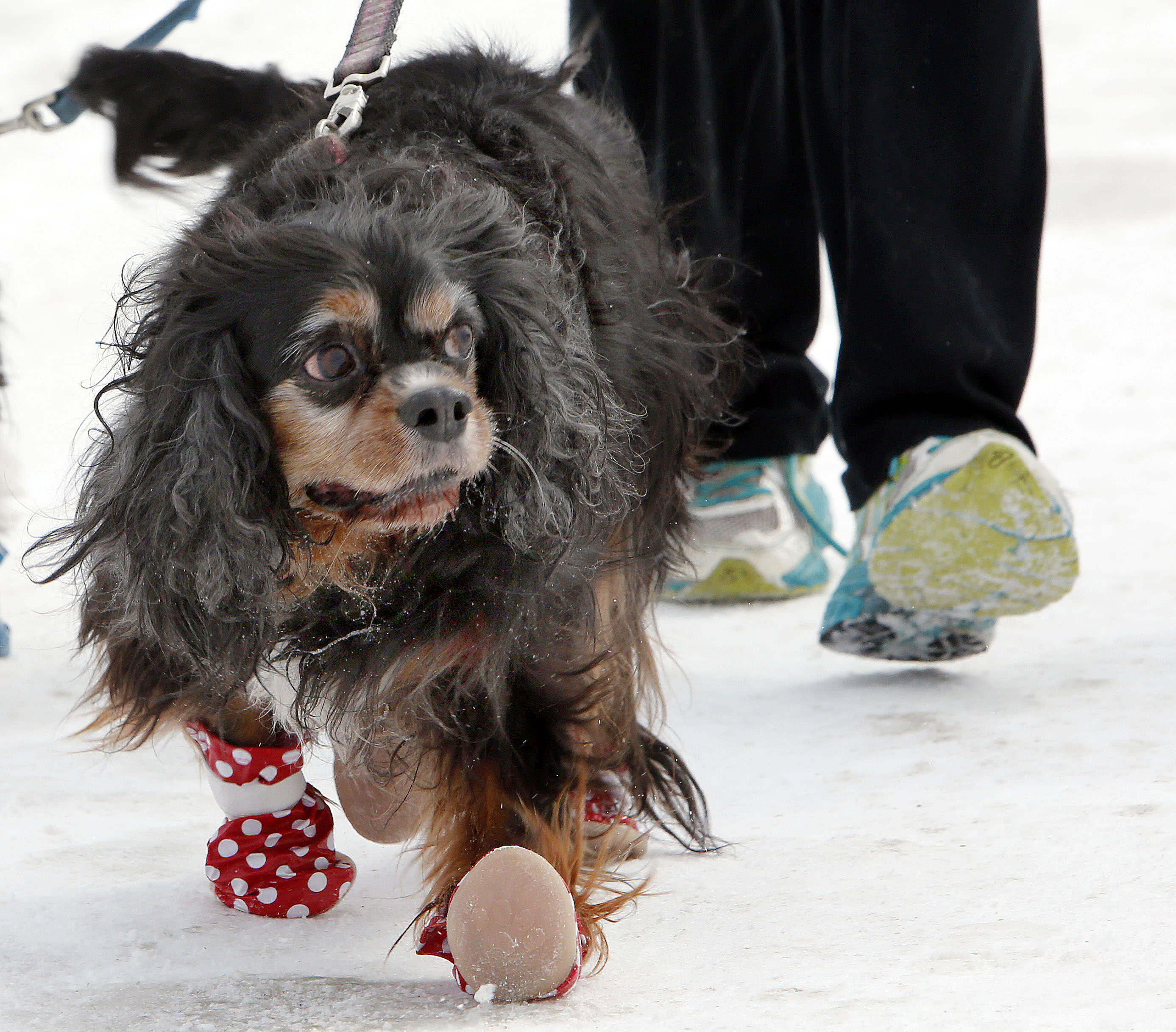Winter weather wrath? Pooches' paws feel the pain, too